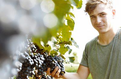 Andreas Unger im Weingarten